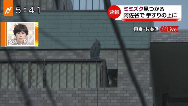 ミミズク TBS 誤報 東京 杉並区 置物 Nスタに関連した画像-03