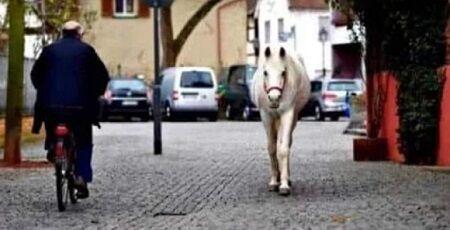 白馬 散歩 ドイツ 一頭 ジェニー 飼い主に関連した画像-01