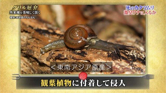 TOKIO カタツムリ 鉄腕ダッシュに関連した画像-07