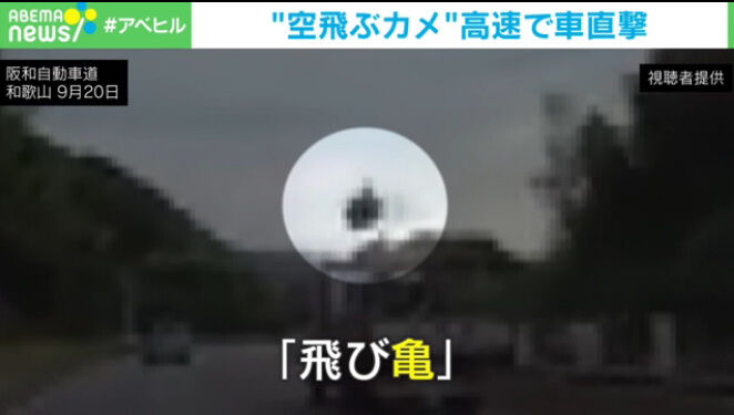 カメ 高速道路 甲羅 直撃に関連した画像-04