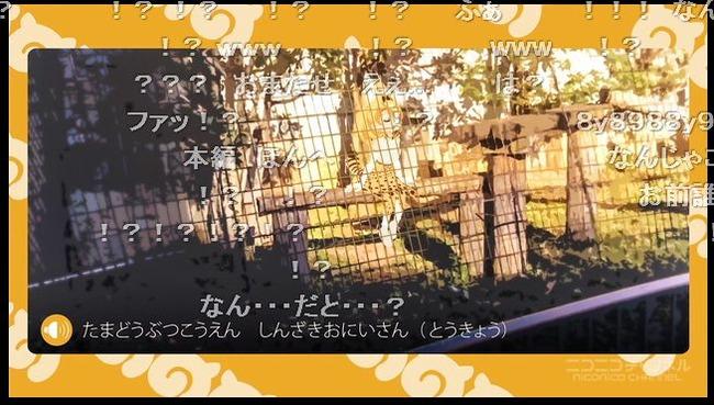 ニコニコ けものフレンズ 1話 公開 コメント 流行らない 最終話に関連した画像-08