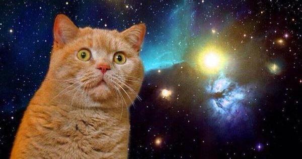 【ヤバイ】データベースの中身がほぼ削除され猫の鳴き声だけが書き残される「ニャンサムウェア」攻撃が活発化