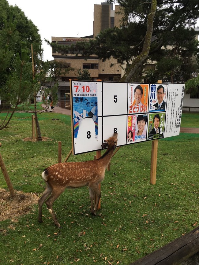 鹿に関連した画像-03