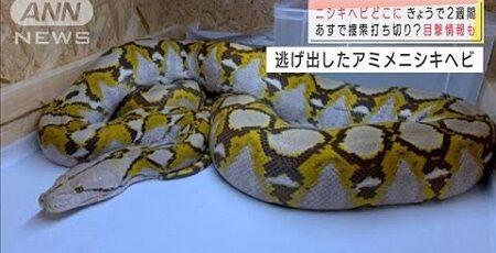 ニシキヘビ 横浜 逃亡 ペット 屋根裏 発見 巨大蛇に関連した画像-01