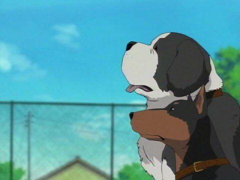 子供行方不明アメリカ犬2匹に関連した画像-01