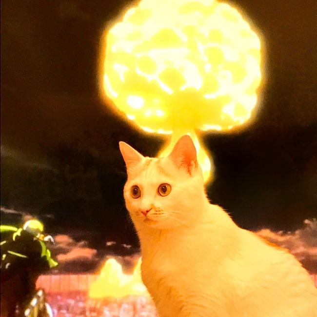 ネコ 進撃の巨人に関連した画像-04