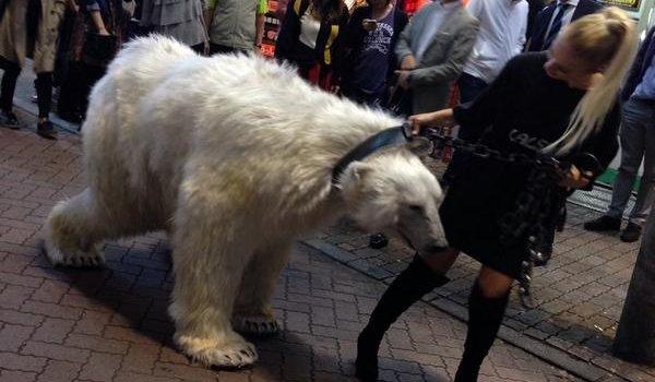 白熊に関連した画像-01
