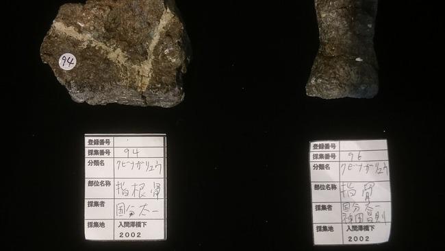TOKIO 鉄腕ダッシュ クビナガリュウ 化石 福島に関連した画像-03