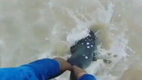 オットセイ 漁網 切断 NGO団体 紳士 優しい世界に関連した画像-01
