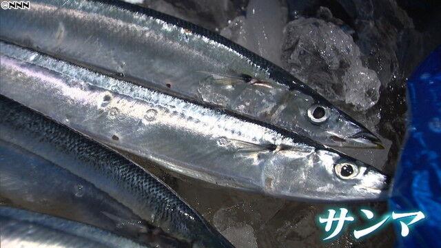 サンマ 秋刀魚 水揚げ量 1% 絶滅に関連した画像-01