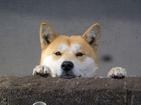 ペットショップ 動物虐待に関連した画像-01