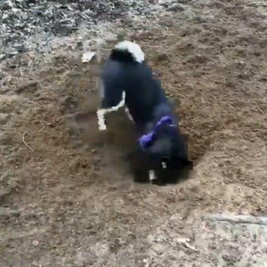 犬 穴掘り テンションに関連した画像-03