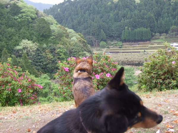 旅館 犬 クレーマー 保健所に関連した画像-04