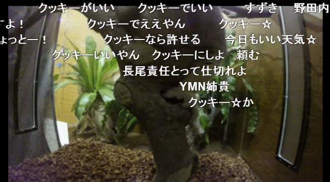 淫夢くん ニコニコ公式 スローロリス ニコニコ生放送に関連した画像-04