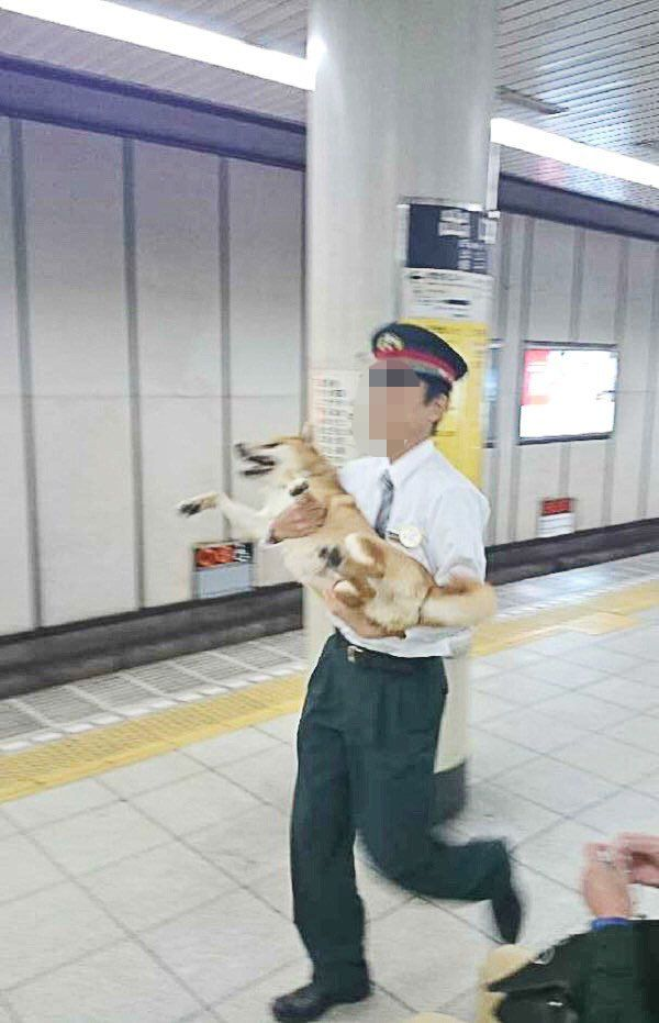 柴犬 逮捕 無賃乗車 キセル パトカーに関連した画像-04