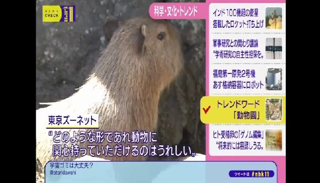 けものフレンズ NHKに関連した画像-03