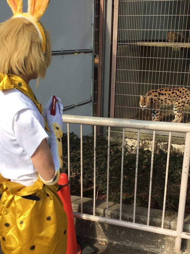 けものフレンズ コスプレ 動物園に関連した画像-05