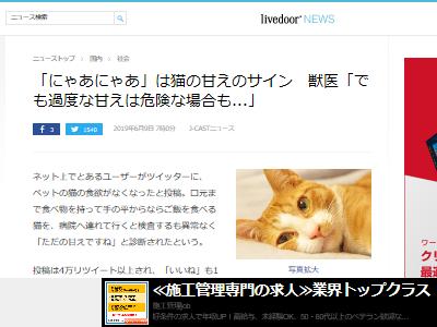 猫 にゃあ 鳴き声 甘え 体調不良に関連した画像-02