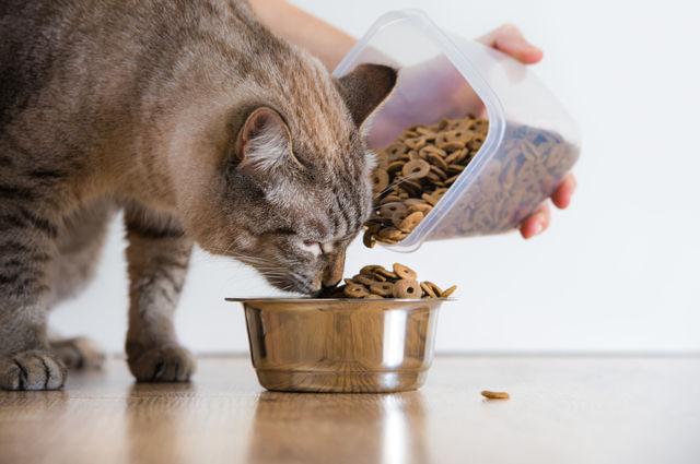 猫 毒殺 29歳無職 男 農薬入りキャットフードに関連した画像-01