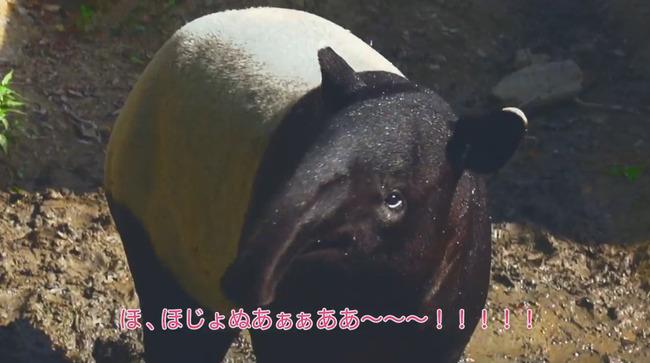 竹達彩奈 大塚明夫 マレーバク 気持ちいい に関連した画像-03