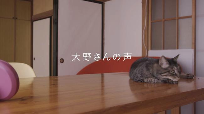 猫 かるかん 声 病気に関連した画像-13