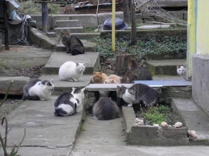 猫 集会 沖縄 動画に関連した画像-01