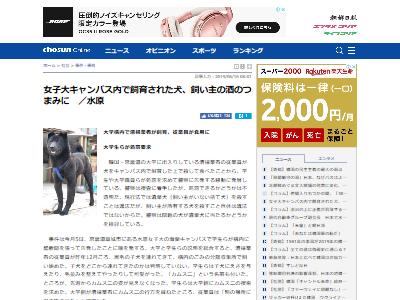 韓国大学犬殺処分に関連した画像-02