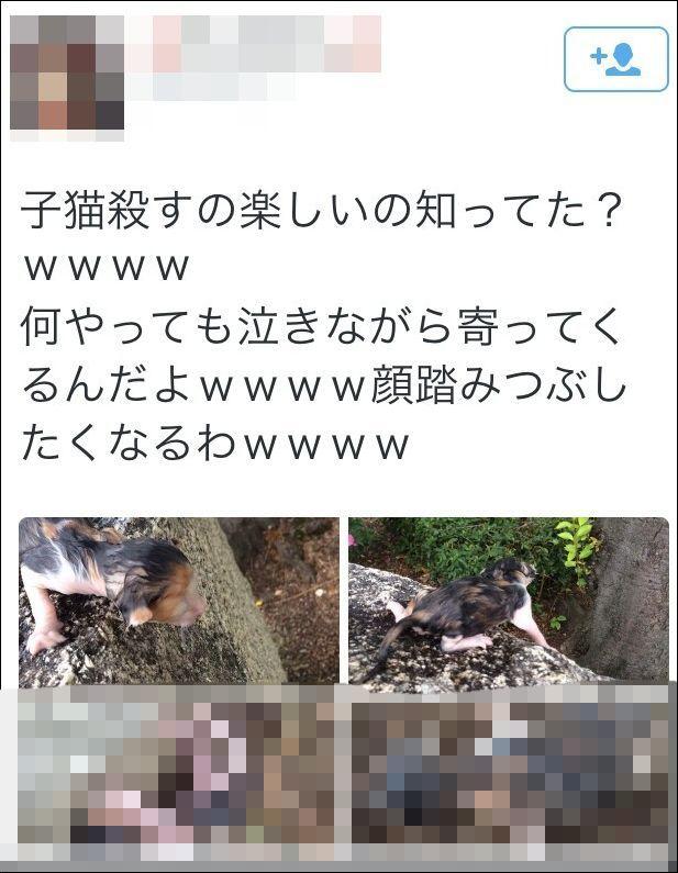 子猫 虐待 動物 炎上に関連した画像-03
