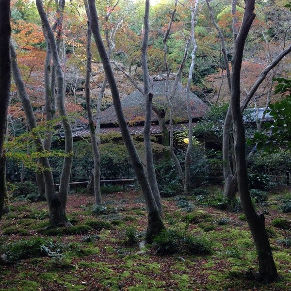 紅葉 ユルクヤル 京都に関連した画像-04