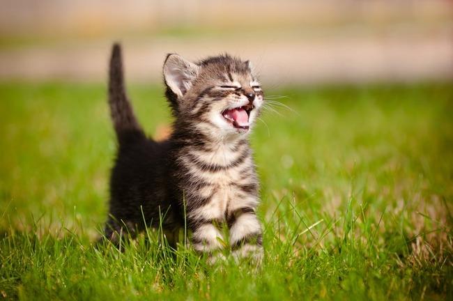 猫 子猫 野良 保護 授乳に関連した画像-01