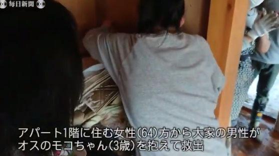 台風19号 猫 行方不明 再開 動画に関連した画像-05