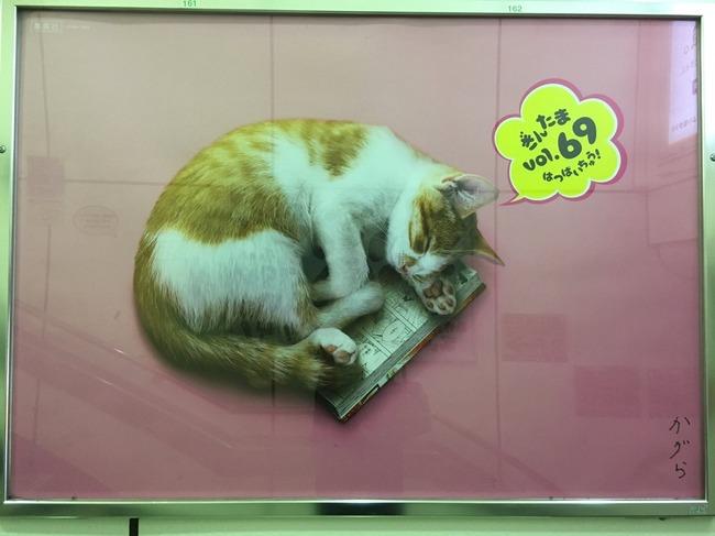 銀魂 新宿駅 宣伝ポスター ギャグに関連した画像-08