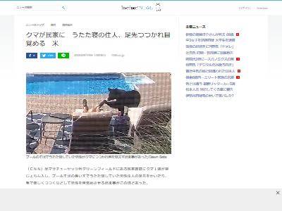 プールサイドうたた寝クマに関連した画像-02