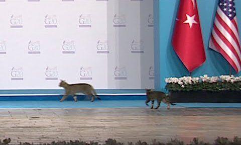 G20 侵入者 猫に関連した画像-01