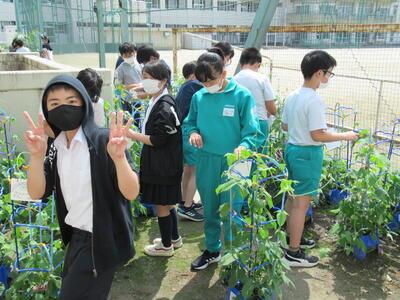 福島県 アサガオ 東京五輪 枯れる 朝顔 子供 オリンピックに関連した画像-04
