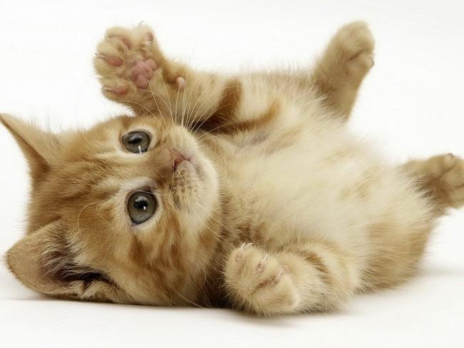 理不尽 猫 癒やし 投稿 ツイッター 不適切 通告 警告 投稿休止  に関連した画像-01