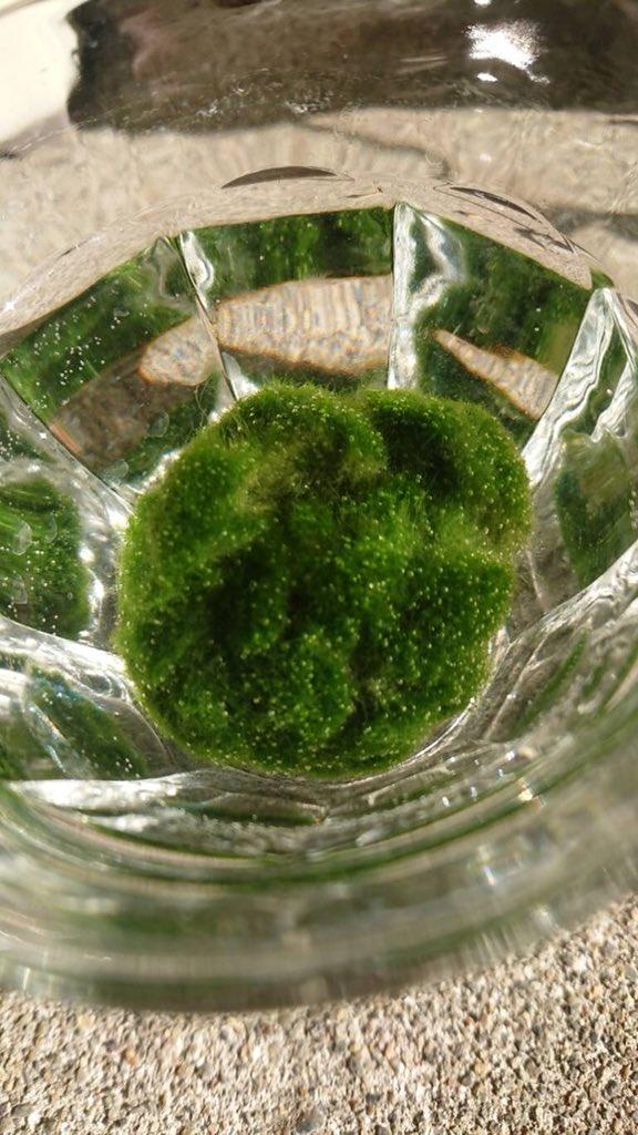 藻 化学繊維に関連した画像-05