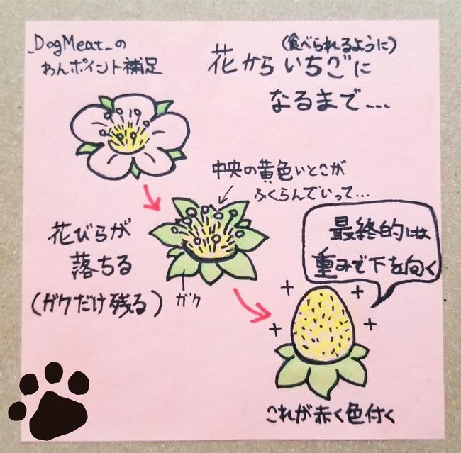 イチゴ狩り 花摘み インスタ映えに関連した画像-04