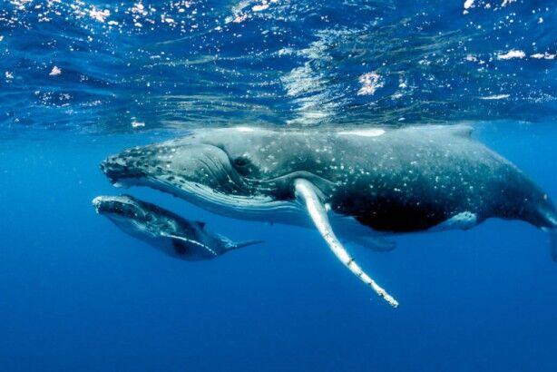 クジラ ホエールウォッチングに関連した画像-01