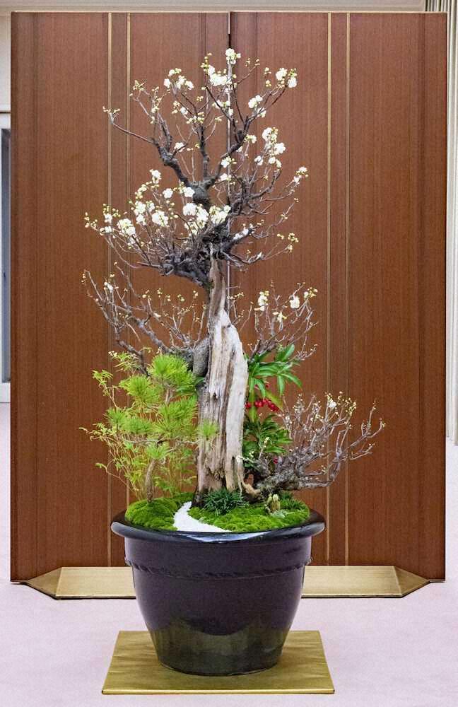 悠仁さま 盆栽 ハイクオリティに関連した画像-03