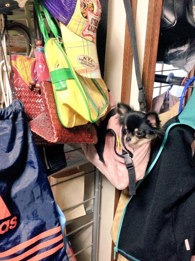 犬 かばん 入れっぱなしに関連した画像-02