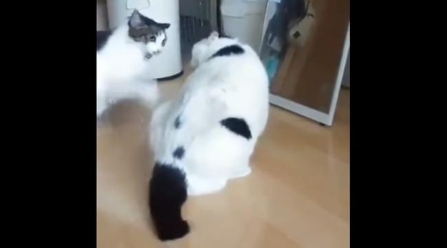 猫 喧嘩 仲裁に関連した画像-03