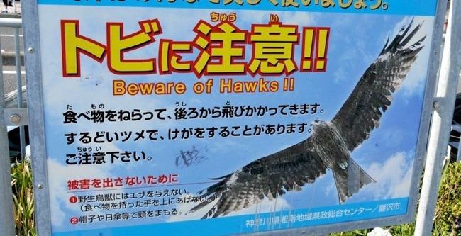 江ノ島 トンビ ドールに関連した画像-01