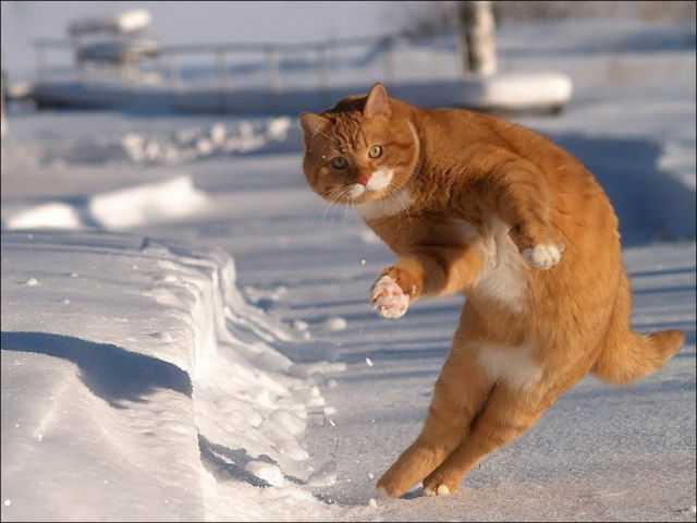 猫 人助けに関連した画像-01