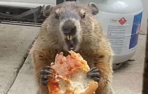 ウッドチャック ピザ 煽り アメリカに関連した画像-01