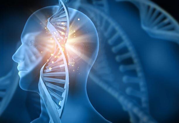 人間 DNA 寿命 38年 ゲノムに関連した画像-01