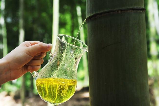 中国 竹 酒に関連した画像-03