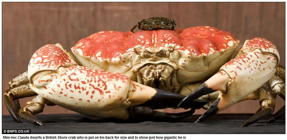 crab-monster3