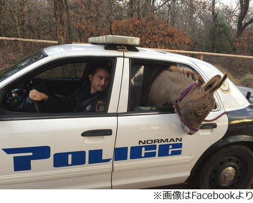 ロバ 逮捕に関連した画像-03