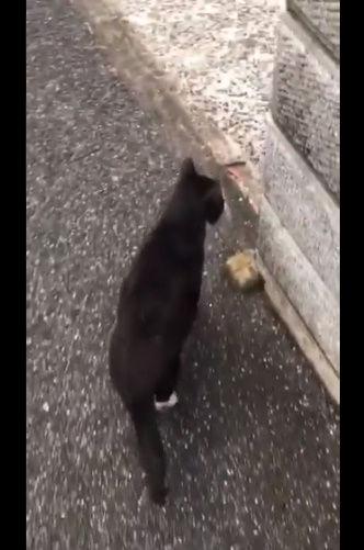 猫 動画 癒やし かわいい 散歩 すり抜け ドジに関連した画像-03